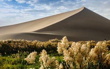 nature, plants, sand, desert, dune