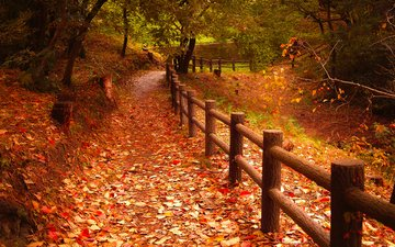 nature, leaves, park, autumn, the fence, falling leaves