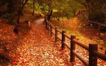 природа, листья, парк, осень, забор, листопад