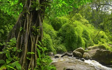 nature, forest, jungle, ferns