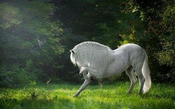 лошадь, трава, деревья, конь, грива