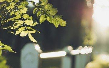листья, макро, ветки, забор, размытость, боке