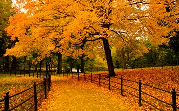 trees, nature, leaves, park, autumn, the fence, alley, ramoncito roman bucud