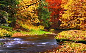 trees, river, nature, forest, leaves, autumn