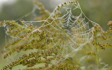 nature, plants, macro, drops, web