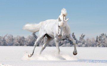 лошадь, снег, зима, конь, грива