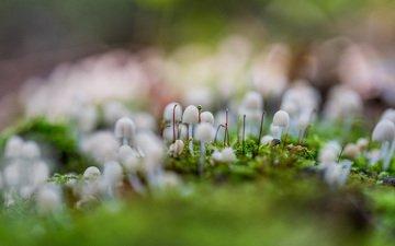 трава, природа, макро, грибы, размытость, мох