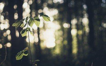 листья, макро, ветки, боке