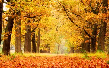 trees, nature, forest, leaves, park, autumn
