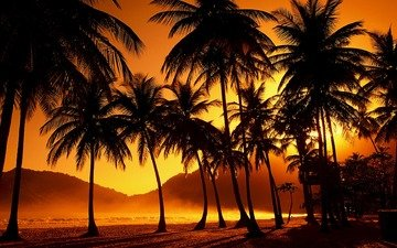 trees, the evening, sunset, palm trees, tropics, the sun's rays