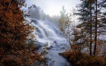 trees, river, fog, branches, waterfall, autumn