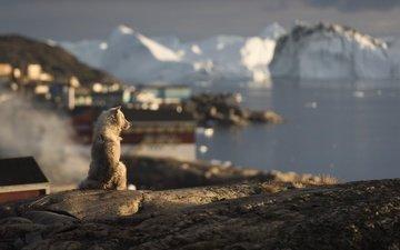 природа, животные, собака, айсберг, друг
