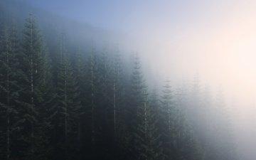 деревья, природа, лес, пейзаж, утро, туман