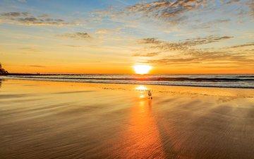 sunset, sea, beach, seagull, 14