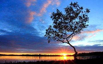 озеро, дерево, закат, 9