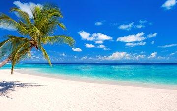 sea, beach, tropics, 8