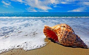 sea, beach, shell