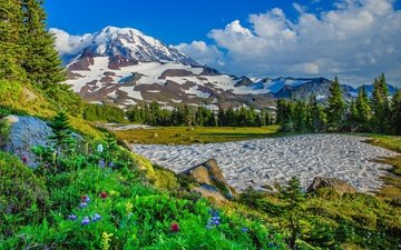 flowers, trees, mountains, snow, usa, washington