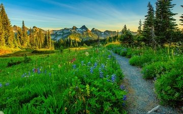flowers, trees, mountains, path, meadow, usa, washington