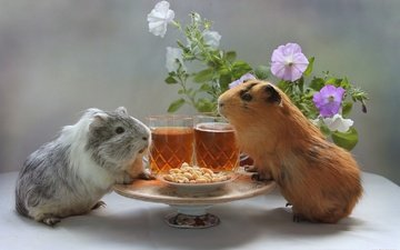 flowers, sea, beer, peanuts, pig, hamsters