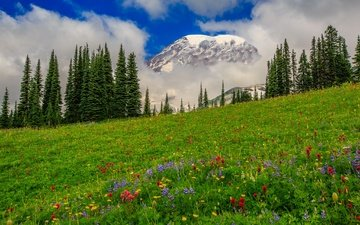 flowers, clouds, trees, mountains, meadow, usa, washington