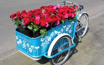 flowers, roses, gerbera, bike