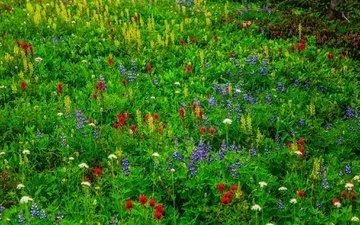 цветы, трава, луг, полевые цветы