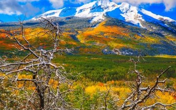 trees, mountains, snow, autumn, colorado, aspen