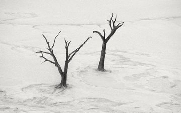 tree, landscape, desert, black and white