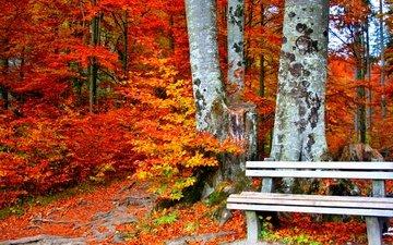 trees, leaves, park, trunks, autumn, bench