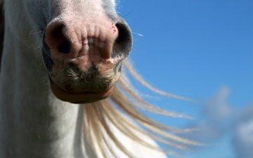 face, the sky, horse, mane