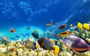 sea, fish, corals