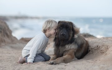 настроение, песок, собака, дети, ребенок, мальчик, пес, дружба, друзья, леонбергер