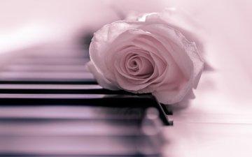 настроение, цветок, роза, бутон, нежность, пианино, клавиши