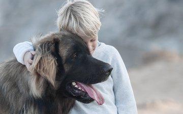 настроение, собака, дети, ребенок, мальчик, язык, пес, дружба, друзья, леонбергер