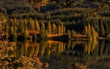 trees, lake, forest, reflection, autumn, scotland, lake shingles, trossachs, achray forest, loch drunkie