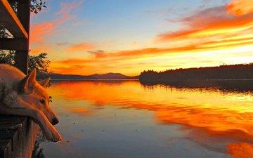 lake, sunset, dog