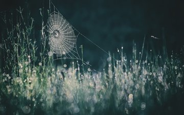 grass, nature, background, drops, web