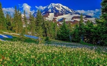 небо, трава, облака, деревья, горы, снег, склон, луг, сша, штат вашингтон