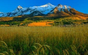 трава, горы, осень, сша, колорадо, аспен