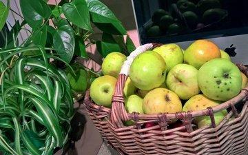 цветы, стиль, настроение, цветок, яблоки, стол, корзина, урожай, вкус осени