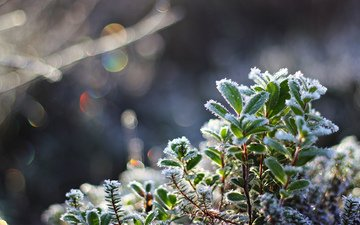 snow, leaves, macro, frost, cold, plant, crystals, bokeh