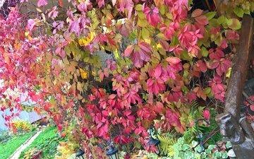 фонари, дерево, стиль, виноград, осень, цвет, перила, папоротник