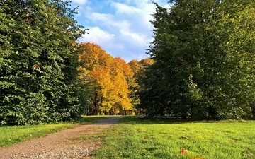 trees, park, track, foliage, autumn, lawn, golden autumn