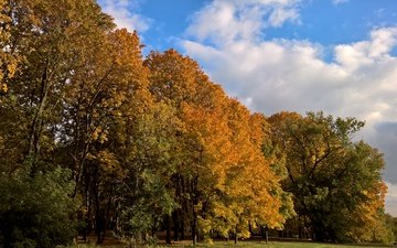 trees, nature, yellow, forest, landscape, park, autumn