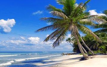 sea, beach, tropics, 3