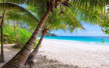 sea, beach, tropics, 7
