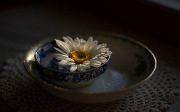цветок, лепестки, ромашка, блюдце, черный фон, салфетка, белая, julie jablonski