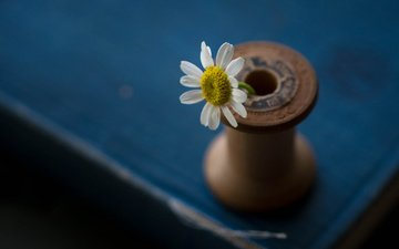 цветок, лепестки, стол, ромашка, катушка, julie jablonski