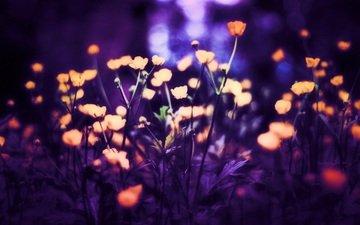 свет, цветы, фон, маки, размытость, by schafsheep, schafsheep